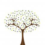 bigstock-olive-tree-5678352